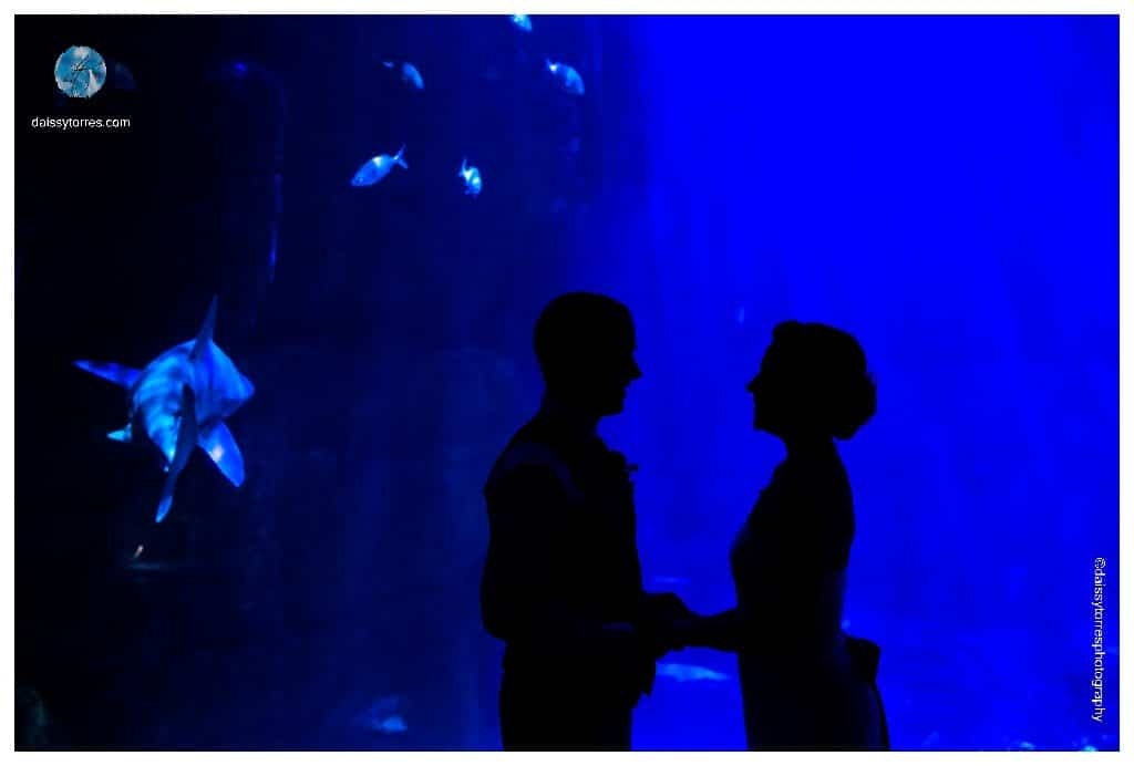 Virginia Aquarium Wedding - shark swims away during this Virginia Beach Aquarium Wedding