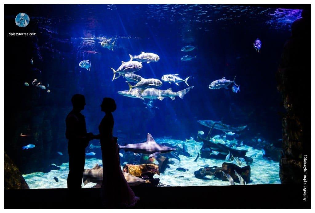 Virginia Aquarium Wedding - Shark tank